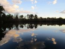 Menantico Ponds Millville NJ April 2017 (11)