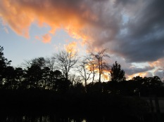 Menantico Ponds Millville NJ April 2017 (25)