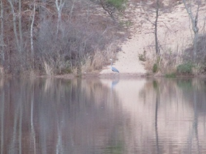 Menantico Ponds Millville NJ April 2017 (27)