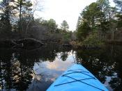 Menantico Ponds Millville NJ April 2017 (4)