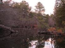 Menantico Ponds Millville NJ April 2017 (6)