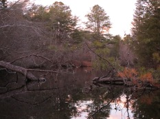 Menantico Ponds Millville NJ April 2017 (6)